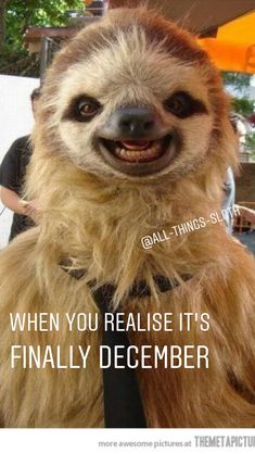 Find the perfect gift for your loved one: Sloth Memes, Cute Sloth, Sloths, Christmas Gifts, Gift Ideas, Funny, Pictures, Xmas Gifts, Photos