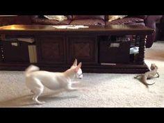 Mira como este adorable perro juega un extraño juego con un lagarto