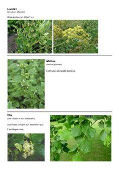 Lista de plantas e ervas comestíveis                                                                                                                                                                                 Mais