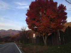 Mt.Dukyu