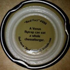 Snapple fact!