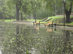 Going to rain off and all all day. Walking In The Rain, Singing In The Rain, Rain And Thunderstorms, Rain Gif, Smell Of Rain, Foto Gif, I Love Rain, Les Gifs, Rain Days
