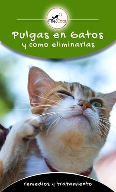 Las Mejores 160 Ideas De Enfermedades De Gatos En 2021 Enfermedades De Gatos Gatos Mascotas
