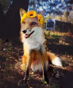 Juniper, The Happiest Fox In The World