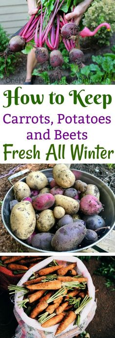 How to Keep Carrots Potatoes and Beets Fresh All Winter. Storing PotatoesGarden TipsGarden ... & One Sweet Potato Produced all of This... | Back yard/ garden ...