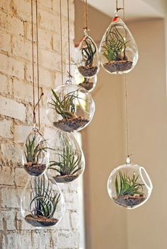 Air plants! Impossible to kill and look amazing in any room whether you hang them like this or use them to accentuate a table!