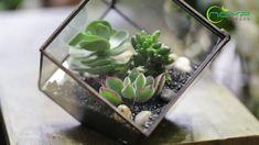 geometric  terrariums