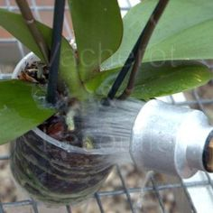 Pots, Terrarium, Simple, Gardens, Watering Orchids, Interview, Plants, Flowers, Terrariums