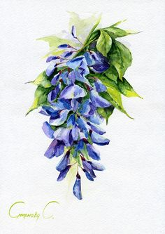 Wistaria, Flowers, blue, Watercolor Original Painting from the Artist #Realism