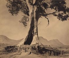 """Spirit of endurance"" (1937) photo by Harold Cazneaux (New Zealand, Australia 1878–1953) via AGNSW.  See this link for photo of the same tree (2008):  http://en.wikipedia.org/wiki/File:Cazneaux_Tree.JPG"