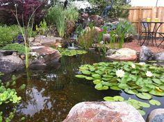 Aquatic Plants in Water Garden