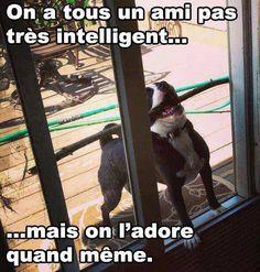 #funny #dog #stick #zoomalia #animalerie