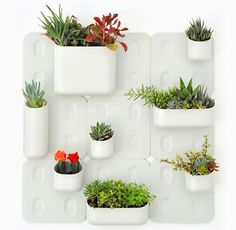 Cover that blank wall with an Urbio vertical garden – Babyology