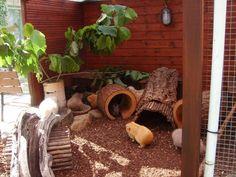 Guinea Pig Enclosures | guinea pig outdoor enclosure for playtime on ... | Pet Enclosure / Ca ...