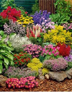 Large perennial garden: buy prime plants - a mixture of beautiful perennials Informations About Großer Staudengarten: kaufen Pin Y - Garden Shrubs, Lawn And Garden, Rockery Garden, Shade Garden, Garden Beds, Herb Garden, Garden Plants, Vegetable Garden, Flowers Perennials