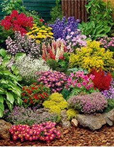 """Perennes ¡que bonitas! """"Podrán cortar todas las flores, pero no podrán detener la primavera"""" (Pablo Neruda)"""