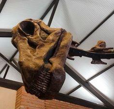 O feriado está chegando?????? kkk. Esse lindo e simpático dinossauro está em exposição lá no Museu de Histórias Naturais da UFMG em Belo Horizonte!!!! Vale pena uma passadinha para conhecer... Em breve os detalhes lá no D&D Mundo Afora!!!! http://ift.tt/1JUgiOy  #mundoafora #dedmundoafora #mundo  #travel #viagem #tour #tur #trip #travelblogger #travelblog #braziliantravelblog #blogdeviagem #rbbviagem #tripadvisor #trippics #instatravel #instagood #wanderlust #worldtravelpics #photooftheday…