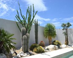 View our gallery full of our recent work for a little bit of inspiration on your next project! Outdoor Cactus Garden, Palm Garden, Dry Garden, Side Garden, Palm Trees Landscaping, Backyard Landscaping, Landscape Design, Garden Design, Fence Plants