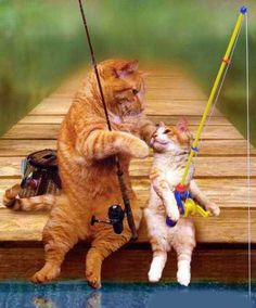 two-cats-summer-fishing #PurinaSweeps