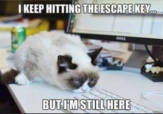 Grumpy cat, grumpy cat meme, grumpy cat quotes, funny grumpy cat quotes, grumpy cat jokes …For the funniest quotes and hilarious pictures visit www. Grumpy Cat Quotes, Funny Grumpy Cat Memes, Hilarious Memes, Cute Cat Memes, Funny Kitties, Fun Jokes, Funny Pranks, Funny Gifs, Videos Funny