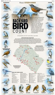 The 17th annual Great Backyard Bird Count. The four-day event encourages everyday people to become citizen-scientists, all from the comfort of home. More information at gbbc.birdcount.org Information Architecture, Information Design, Information Graphics, Great Backyard Bird Count, Visual System, Citizen Science, How To Create Infographics, Extreme Weather, Data Visualization