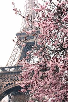 Paris Photography - Paris Je t'aime - Paris in the Springtime - Pink Cherry Blossoms Eiffel Tower - Paris Home Decor - Blush Pink