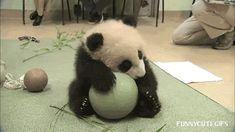 Dawww more cute animals: https://commaful.com/play/late/hump-day-1