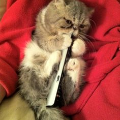 The remote control is mine...