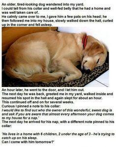 A sweet dog story.