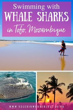 Swimming with Whale Sharks in Tofo Mozambique Adventure Tours, Adventure Travel, Travel Around The World, Around The Worlds, Swimming With Whale Sharks, Snorkelling, Secret Places, Group Tours, Africa Travel