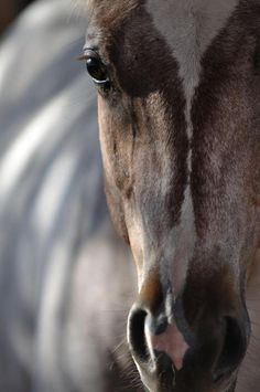 There are horses that cannot be broken, those are the horses that see through us.