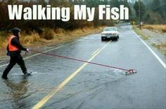 Best photo of a man taking his fish for a walk you will see all day