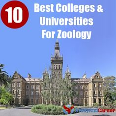 10 Colleges And Universities For Zoology Zoology is a study of animal life. It is a broad discipline of life science that covers a wide range of topics related to the animal kingdom including… College Fun, Education College, College Life, My Future Job, Future Career, Dream Career, Dream Job, Zoologist Career, Marine Biology
