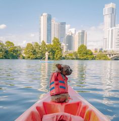 Another West Coast Tech Company Coming to Austin & A Big Celeb Too! The Great Austin Scavenger Hunt, & More! Texas Hill Country, Water Sports, Dog Life, West Coast, Pup, Celebs, Dogs, Prints, Jackets