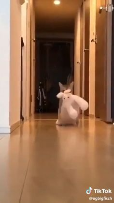 That's My toy - Happy Pet Lover's Videos - Kitty kit Cute Little Animals, Cute Funny Animals, Funny Cute, Funny Animal Memes, Funny Animal Pictures, Cat Memes, Cute Cats And Kittens, Kittens Cutest, Gato Gif