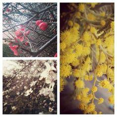 #flores #primavera