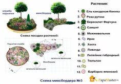 схема клумбы с хвойными барбарисом спиреей: 30 тис. зображень знайдено в Яндекс.Зображеннях