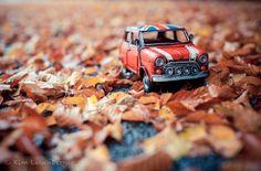 Autumn leaves... by Kim Leuenberger - Photo 17547937 - 500px