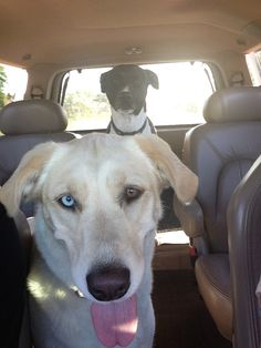 Lucy and Chili on their way to the nature center, smiles all around :)