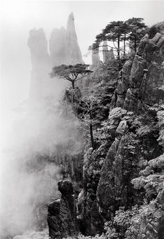 Pines and stones in mist, taken at Heavenly Sea New Path, June 2004 × © Wang Wusheng
