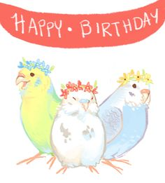Image result for budgie happy birthday gifs