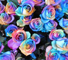 Rainbow Roses - - Leanne and David Kesler, Floral Design Institute, Inc., in Portland, Ore. Beautiful Rose Flowers, Flowers Nature, Angel Flowers, Hippie Flowers, Rainbow Painting, Rainbow Art, Flower Phone Wallpaper, Flower Wallpaper, Luxury Flowers