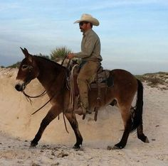 This Mule rides anywhere! Work With Animals, Cute Animals, Aqha Western Pleasure, Mules Animal, Wild Horses Running, Red Dead Redemption Ii, Western Comics, Western Riding, Wild Creatures