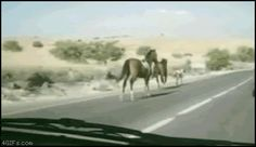 """""""You can't stop me, I am a horse!"""""""