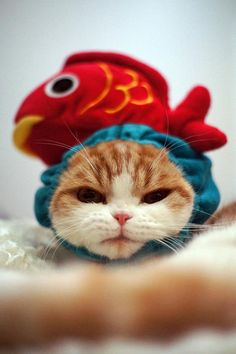"supportyoukittenme: ""This cute kitty is not satisfied with the look. """