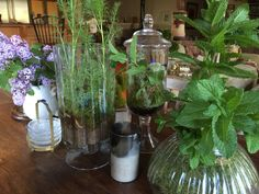 Thrift store glassware violets, Noah's cradle, peppermint , clovers nestled in moss on beds of pea gravel