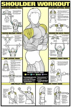 Free Exercise Charts Posters | home fitness accessories fitness charts shoulder workout poster ...