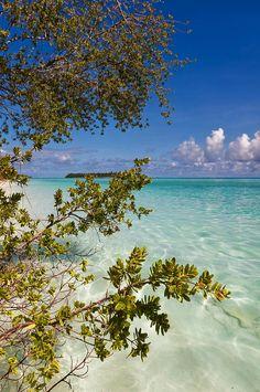 Tropical Island by Jenny Rainbow