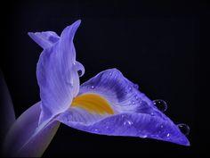 Peak Blue ... by Herbert Pregel on 500px