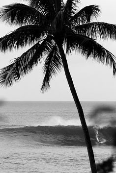 Palm tree, beach, black and white, Black And White Beach, Black And White Pictures, Black Sand, Mode Poster, The Beach, Sand Beach, Black And White Aesthetic, Beach Photos, Picture Wall